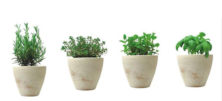 teglice za začinsko bilje